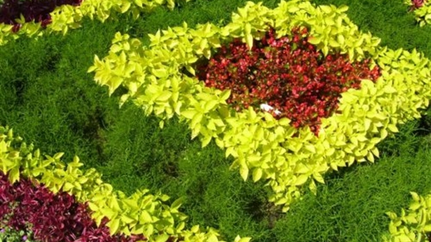 Vers insectes et limaces comment lutter contre les for Lutter contre les vers des salades