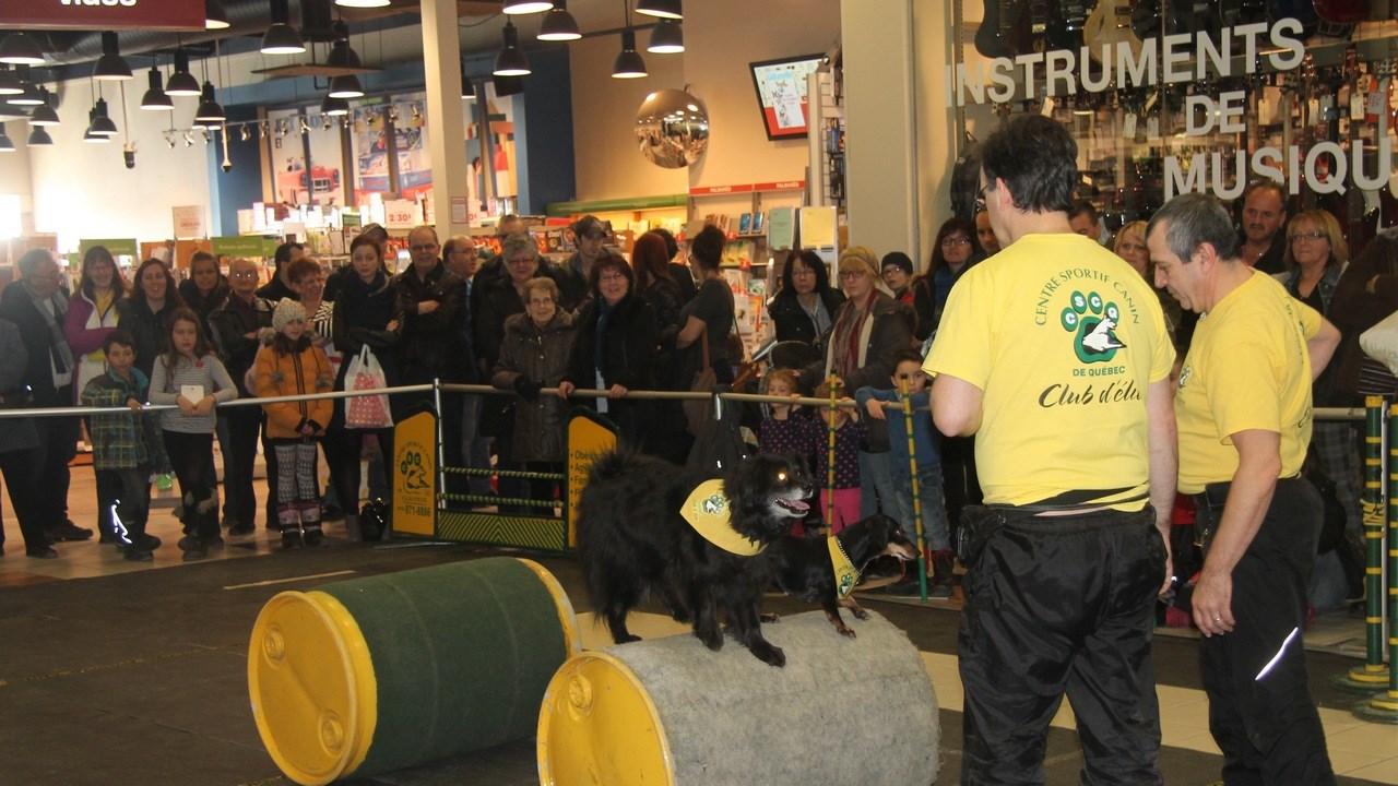 Le salon « Info Canin » est présenté au Carrefour Saint