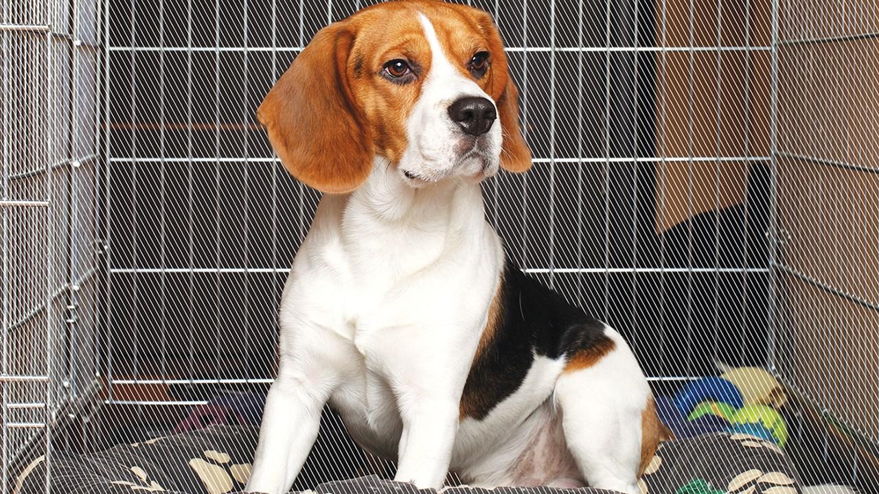 La petite maison de votre chien est sa cage le saviez for Petite maison pour chien