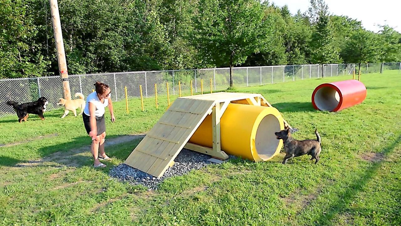les premiers chiens du parc canin de st georges tout excit s par leur espace de jeu. Black Bedroom Furniture Sets. Home Design Ideas