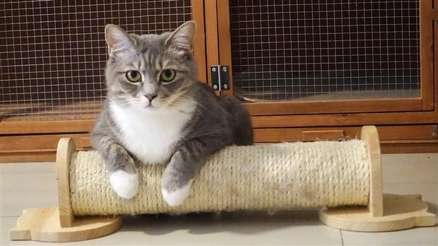 comment choisir le bon griffoir pour son chat